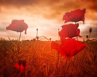 Poppy Field Fine Art Digital Print - Instant Download