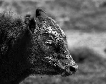 Nature Photography, Black and White Photography, Black and White Prints, Black and White Wall Art, Animal Portraits, Animal Photography