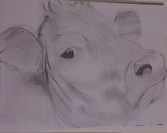 Pencil Sketchings of cows