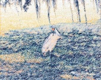 Sandhill Crane at Peace