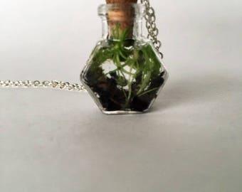 1in Hexagon Tiny Terrarium Necklace