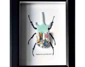 Framed Recycled China Rhino Beetle Taxidermy - Mint with Bird