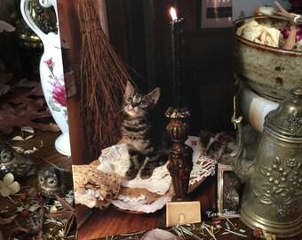 5x7 One Photography Art Print Cute Kitty Tabby Familiar Cat Victorian Witchcraft Candle Witch Halloween Kitten Folk Terri Foss Skyla