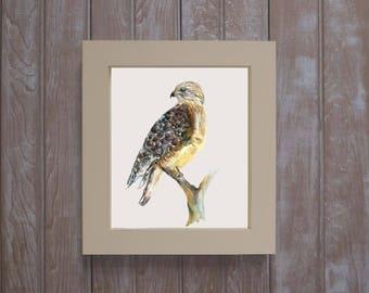 Framed red shoulder hawk- ornithology art- hawk watercolor-  framed watercolors- woodland art-  bird painting-  birders gift-  bird art