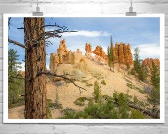 Western Art, Bryce Canyon, Utah Photography, Desert Landscape, Forest, Pine Trees, Mountains, Desert Art, Landscape Picture, Murray Bolesta