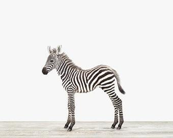Animal Nursery Art Print. Baby Zebra. Safari Animal Nursery Decor. Baby Animal Photo.