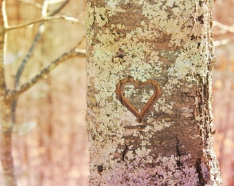"Nature Photography, Woodland Graffiti, Wood Carving, Heart, Valentine, Romantic, Love, 4x6, 6x9 or 8x12. ""Nature Lover""."