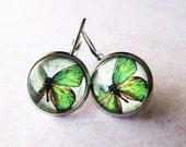 Apple Green Small Butterfly Glass Dome Drop Earrings