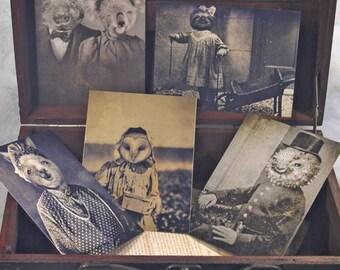 Set of 5 original Postcards - Mini Print Set N4 portrait animals - anthropomorphic portrait old sloth alpaca blowfish wombat koala owl