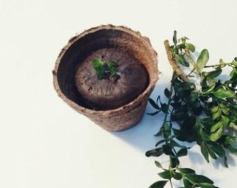 Mini Plant Kit, Wildflowers, Flower Garden Kit, Flower Seed Garden, Nature Gift, Gift under 15, Gift for Mom, Gift for Boyfriend