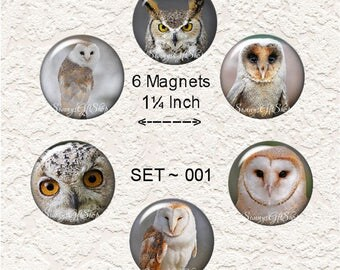 "Owl Magnets Choose From 5 Different Owl Prints 1.25"" in Size Buy 3 Sets Get 1 Set Free 6-024M"
