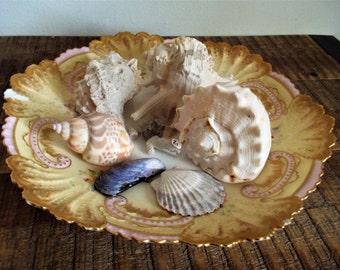Collection of Seashells on Vintage French Limoges C. Ahrenfeldt Gilded Plate