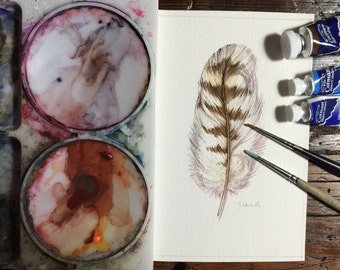 Original watercolour painting of a Hawk Feather