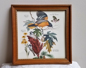 Vintage Birds Botanicals Art Print of Baltimore Oriole and Chickadees Wood Frame 11 x 11, Massachusette Maryland Maine State Birds & Flowers