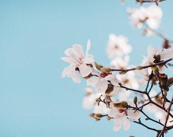 Magnolia Photo, Flower Art, Floral Print, Nature Photography, Minimalist Print, Minimalist Bedroom Ideas, Nature Images, Blue Sky Photo