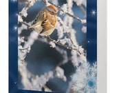 50% OFF - 10 Sparrow Christmas cards, bird Christmas cards, nature Christmas cards, holiday cards, bird photography, nature photography