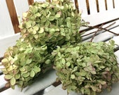 DRIED Hydrangea Flowers  3 Lovely green flowers with pink tinge flower heads on stems for Prim flowers Wedding flowers Shabby cottage floral