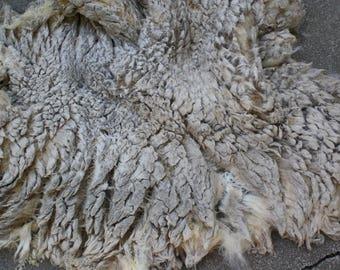 Coated Raw Whole Lambs Fleece White Beauty