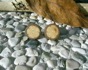 Wooden STUD Earrings From OAK Tree Branch