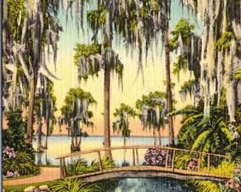 Cypress Gardens, Florida, Tropical Wonderland - Linen Postcard - Postcard - Unused (L)