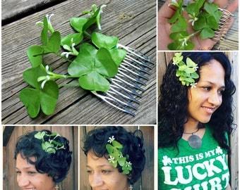 Shamrock plant hair flower comb, Wood sorrel hair flower comb, greenery, fairy hair accessory, Woodland, clover, st patricks day