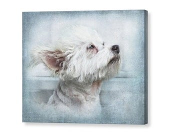 Cute White Puppy Dog Portrait, Chi-poo, Chipoo, Chihuahua Poodle Mix  Fine Art Photography Giclee Gallery Wrap Canvas