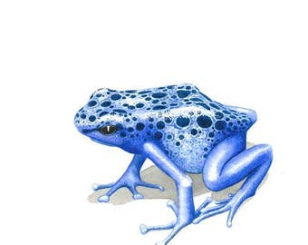 Signed print. Blue poison dart frog - small