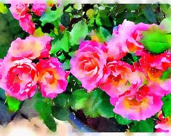 Watercolor Print - Pink Roses - Floral