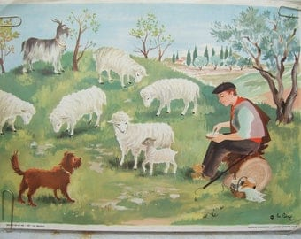 French Vintage Classroom Posters.  Images of Life, by Helene Poirie.  Les Moutons. Lithograph.  School Poster.