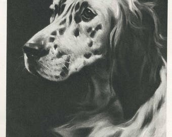 Antique ENGLISH SETTER Dog Print 1940s English Setter Illustration Artwork Vintage Dog Gallery Wall Art Gift for Dog Lover 2868