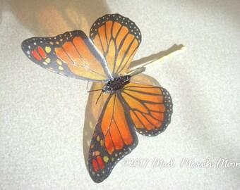 Monarch Butterfly hair pin, transparent rich colour bobby pin, handmade hair accessory single hair grip