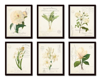 White Botanical Collage Print Set No. 4, Botanical Print Set, Wall Art, Giclee, Art Print, Botanical Print, White Flower Print, French Style