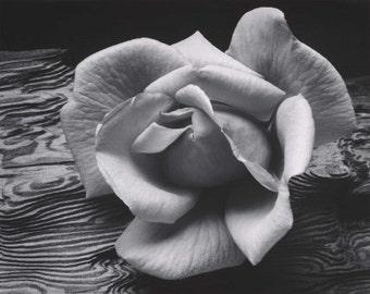 Ansel Adams, Rose on driftwood, Yosemite, Half dome, El Capitan, clouds, mountains, black & white photo, fine art print poster canvas