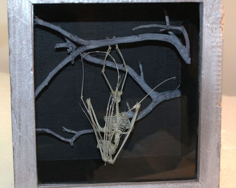 Bat Skeleton in Wooden Box with Glass Front NY