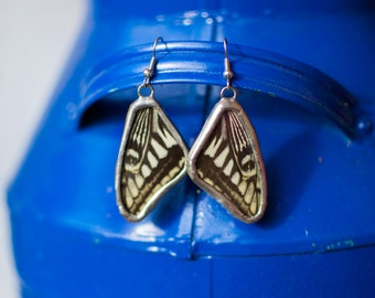 FREE SHIPPING  Real Butterfly Wings Encased in Hand Cut Glass and Soldered Earrings