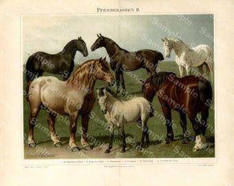 19th Century Gorgeous horses color lithograph print, decorative art, original art,Antique Victorian, Encyclopedia page, fold out