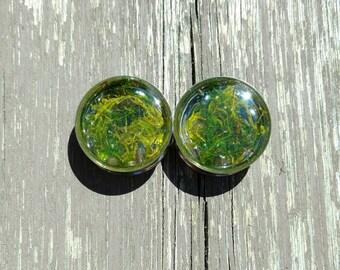 Spring Moss Plugs - 4g, 2g, 0g, 00g, 7/16, 1/2, 9/16, 5/8, 3/4, 7/8, 1, 1 1/8, 1 1/4, 1 3/8, 1 1/2, 1 5/8, 1 3/4, 1 7/8, 2