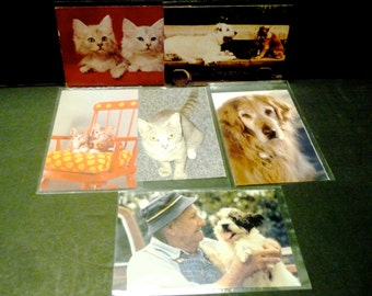 6 Chrome Post cards - Dogs and Cats - 5 animal rescue - one just a kitten card (Mr & Mrs).