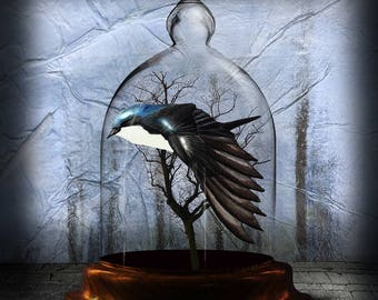 Bell Jar Series - Swallow