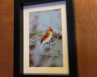 Female, Cardinal, Bird, fine art, Photo print