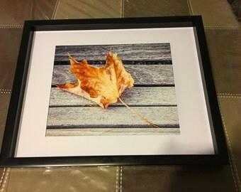 lone, leaf, fine art, Photo print