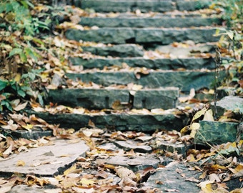 Grant Park Steps in the Fall Autumn Urban Nature Landscape Fine Art Photo Print Film Photography by Rose Clearfield on Etsy