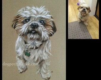 Custom Pet Portrait, Pet Drawing, Pet Memorial, Dog Portrait, Realistic Pet Portrait from Your Photo, Gift Idea, Cat Portrait