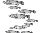 Murray cod fish drawing signed print