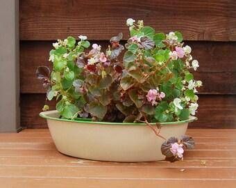 Rustic Cream Enamel Oval Basin, Vintage Cream and Green Enamel Tub, Enamel Planter, Green and Cream Enamel Wash Basin