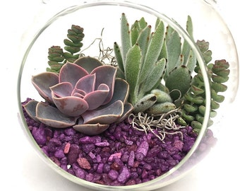 "DIY Terrarium Kit ""Pretty in Purple""-Succulent kit-Large Globe Terrarium-Gardener Gift-Housewarming Gift-Graduation Gift-Birthday Gift"