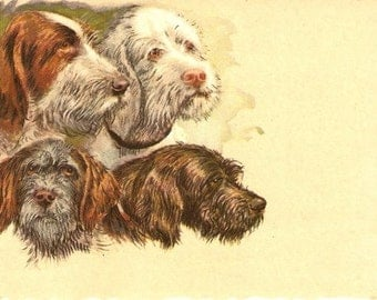 1909 Terrier and Other Dogs Postcard