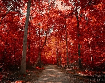 Autumn Red Woods Instant Photo Download, Insta-Photo, Landscape Photography, Virginia, Fall, Fall Colors, Warm, Trees, Leaves, Forest, Path
