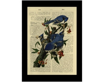 Blue Jay Vintage Birds American Avarian - Dictionary Print Book Page Art