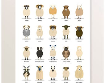 Sheep Poster, Farm Animals, Sheep Breeds, Farm Illustration, British Livestock